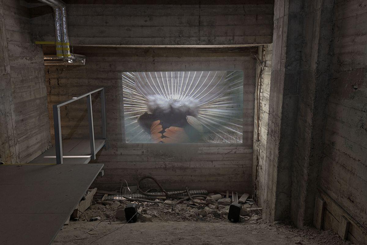 projektion1-f257fd8986e4dd8b63069e5edb55f13e